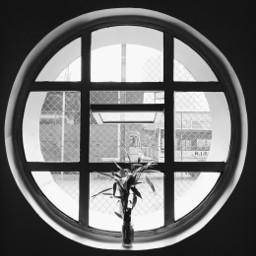 frommywindow window geometric myphotography photography pcfrommywindow