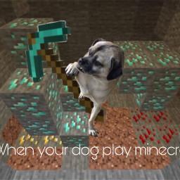 minecraft crazydog