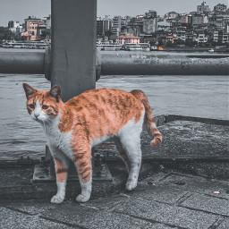 freetoedit istanbul iseeyou ramadan cats