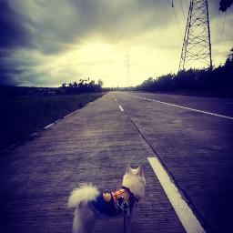 dog sunsetsoon alone_but_happy