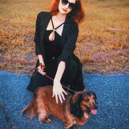 freetoedit dacshund mypetandi dog glamour