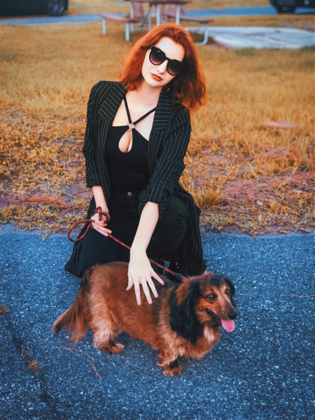 #freetoedit #dacshund #mypetandi #dog #glamour #photography