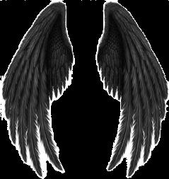 asthetic darkasthetic wings black dark