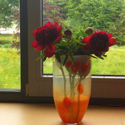 flowerarrangement freetoedit myphoto flowers window pcfrommywindow