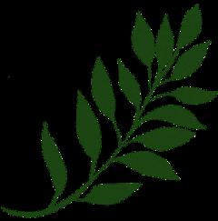 freetoedit nature green plant