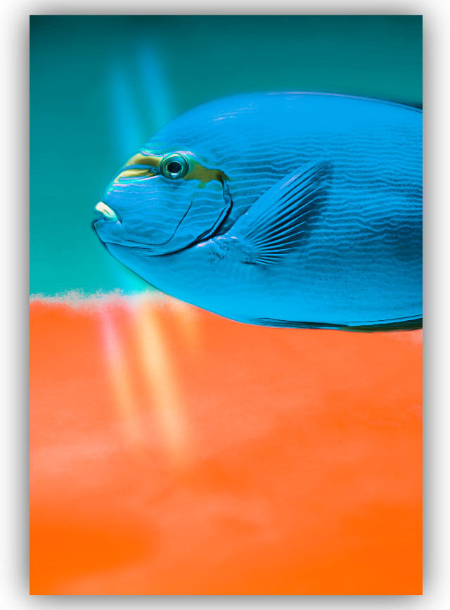 #freetoedit #fish #blue #orange #colors #amazing  🐡🤗🧡