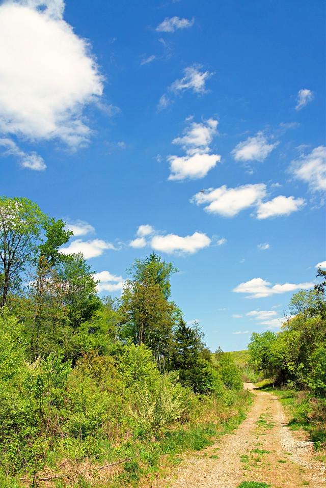 #freetoedit #naturephotograpy #walkinthewoods #beuatifulsky Happy weekend 😀🙋♀️