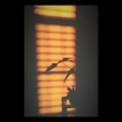 freetoedit blinds silhouette orange aesthetic
