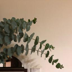 plants leaf leaves quarantine time freetoedit