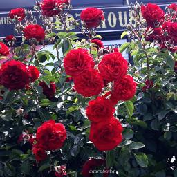 myclick📷 photography phonephotography flowers blossom