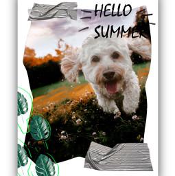 freetoedit hello summer dog