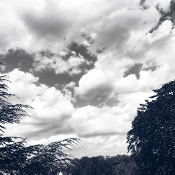 freetoedit clouds nature sky trees
