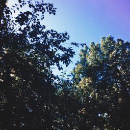 nature trees sky naturaleza myphoto freetoedit