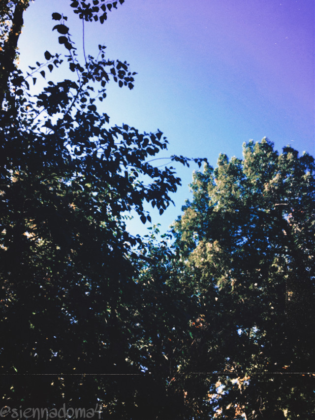 Guess who couldn't find anything to post for today? Me! ;D Here's a picture a took of a few trees that I thought was kind of cool :) 🌳  Better photos coming soon, I promise! ✌🏻😂 T a g s : @nastiya367 💗💗✨ @thats_mali / @just_mali_  💗✨ @dilara_2210 / @the_lil_honey 🔥🦋 @artist_noor ❤️❤️ @jennaulin 💗 @aggie2_0 💫 @bffs_tumblr 🌟 @ruyacenik_02 🌟 @rachelvbsb88 🥀❤️ @xxjxst_leaxx 💛 @gweni_120208  / @gweni_1202 💫⚡️ @_janaaaa_ 🦋   My second account: @just_sienna :)  Photo tags: #nature #trees #sky #naturaleza #myphoto  Have a great day/night! :D 💗💗✌🏻🦋  #freetoedit
