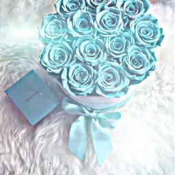 freetoedit teal white furrug roses