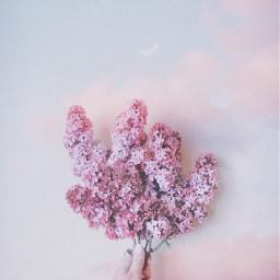 freetoedit pastel sky irclilacinmyhand lilacinmyhand