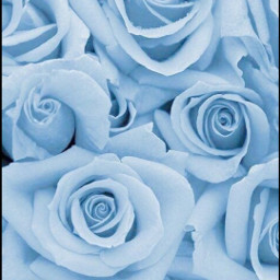 roses blue tumblr picsart ihopeyoulikeit