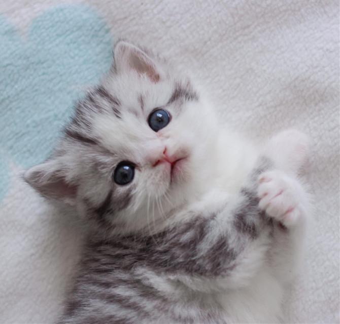 #cat #cats #pet #pets #animal #animals #love #puppy #art #like #like #likeit #likes #like4follow #follow #followmeplease #follow4follow #picsart