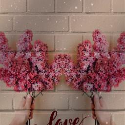 freetoedit ladrillos flores tumblr cool irclilacinmyhand lilacinmyhand