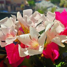 flowers sunlight beautiful spring faith scripture
