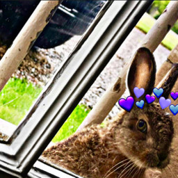 freetoedit hearts bunny rabbit petsandanimals