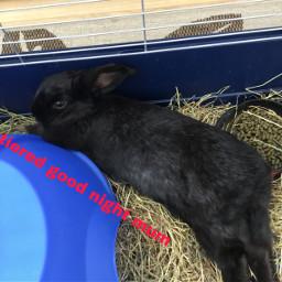 bunny sleepy