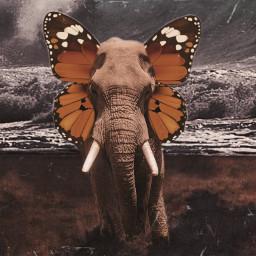 freetoedit picsart challenge elephant world ecsurrealisticworld