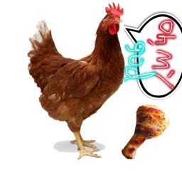 chiken freetoedit