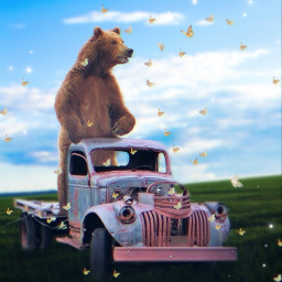 freetoedit bear butterflies oldcar grass