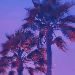 freetoedit palmtrees palmtree purple pink