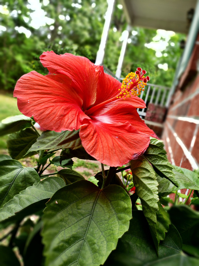 #flowers #naturephotography #myyard
