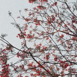 freetoedit flowers red flora