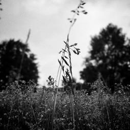 grassfield grassland nature blacknwhite blackandwhite