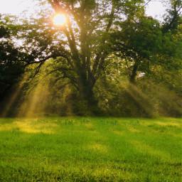 photography pcrollingfields rollingfields green greenery