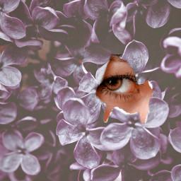 freetoedit eye flowers purple