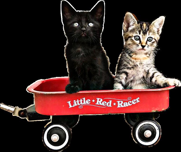 #freetoedit #little #red #racer #wagon #stars #cats #text #wheels #petsandanimals #kitty #kittens