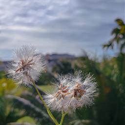 naturaleza🍃 flowerphotography flower greenaesthetic myphoto freetoedit