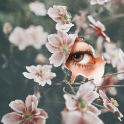 freetoedit eye flowers happyweekend