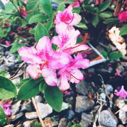 flowers flower nature natualeza georgefloyd freetoedit