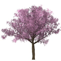 freetoedit pohon daun bunga