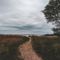 path coastline tree places interestingplaces freetoedit