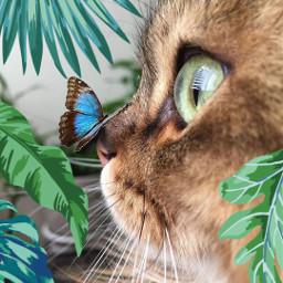 freetoedit cat buterfly leaves srcmonsteramoment monsteramoment