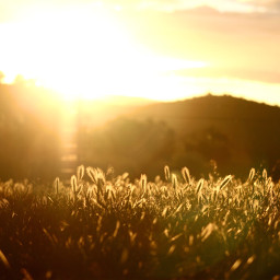 pcrollingfields rollingfields sunset goldenhour goldenhourphotography