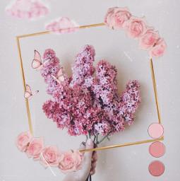 challenge pink lilac flower aesthetic freetoedit irclilacinmyhand lilacinmyhand