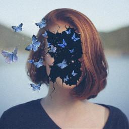 freetoedit crack hole butterfly butterflies