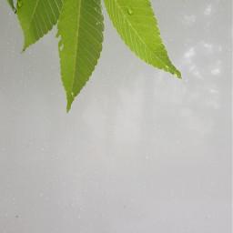freetoedit white wall leaves
