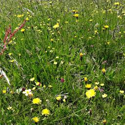 freetoedit prato fiori