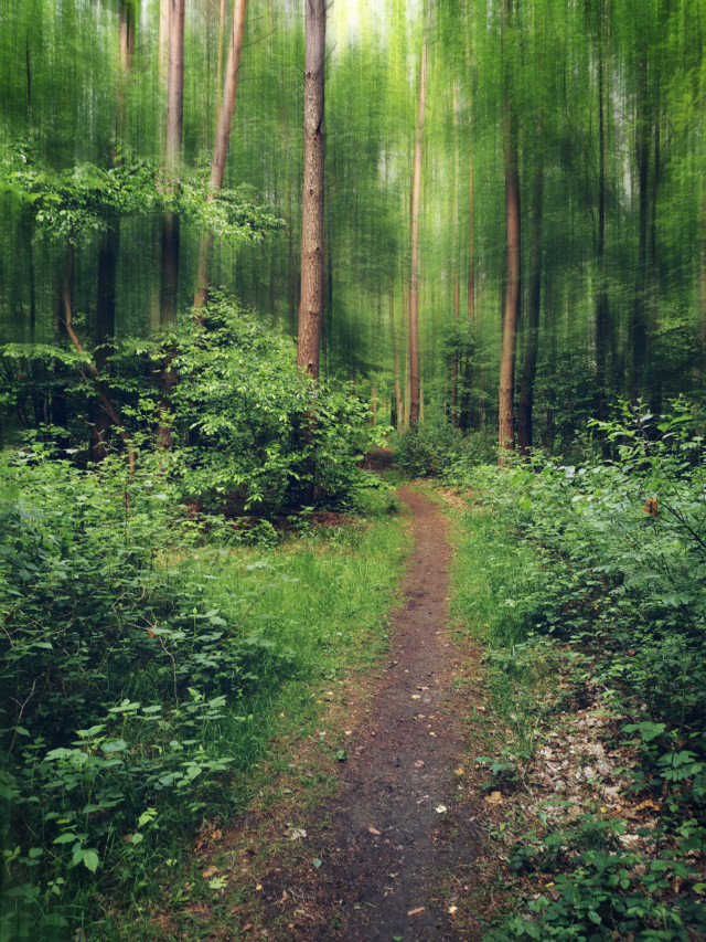 #freetoedit #spring #forest #woodland #road #forest #forestroad #trees #beautifulday #beautifulnature #myphoto #myedit #blureffect