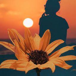 nature aesthetic sun sunset yellow freetoedit