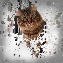 freetoedit cat desafio picsart artistic rcsplatterart splatterart